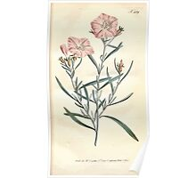The Botanical magazine, or, Flower garden displayed by William Curtis V9 V10 1795 1796 0003 Convulvulus Linearis, Narrow Leaved Convolvulus Poster
