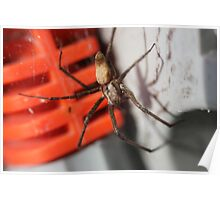 Sheet Web Spider Poster