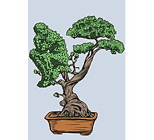 Bonsai Thinking Photographic Print
