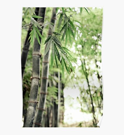 ~ bamboo forest ~ Poster
