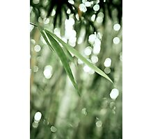 ~ bamboo leaves ~ Photographic Print