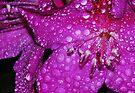 Rain Flower by Tori Snow