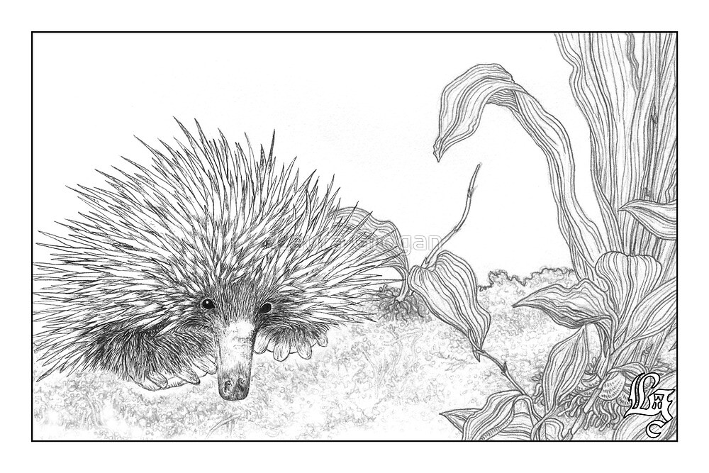 Echidna and orchid by Laura Grogan