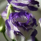 Floral Delights by Nira Dabush