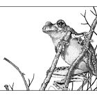 Peron's Tree Frog by Laura Grogan