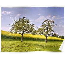 Apple trees Poster
