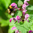 Bee at work by David Freeman
