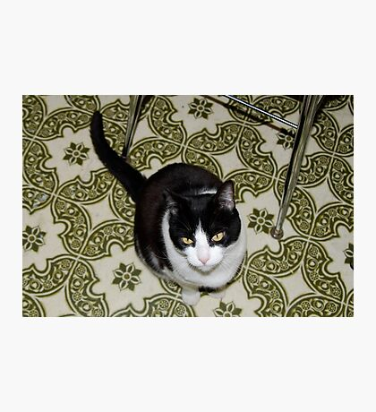 Kitty the Cat Photographic Print
