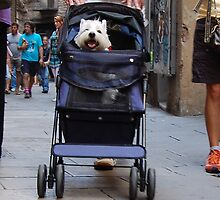 Dog in a baby buggy by Bredenkamp