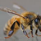 bees like to party by meegs1