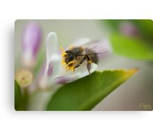 Bee Beautiful Canvas Print