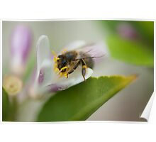 Bee Beautiful Poster