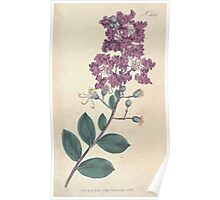 The Botanical magazine, or, Flower garden displayed by William Curtis V11 V12 1797 1798 0097 Lagerstroemia Indica Indian Lagerstroemia Poster