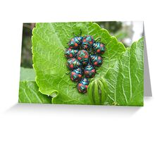 Guess Who Had Baby Beetles. Greeting Card