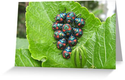 Guess Who Had Baby Beetles. by Mywildscapepics