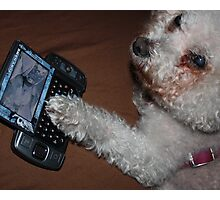 Who Is This Dog On Your Phone? (The Betrayal)  Photographic Print