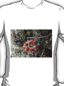 British Soldiers Lichen, Cradle Mountain, Tasmania, Australia. T-Shirt