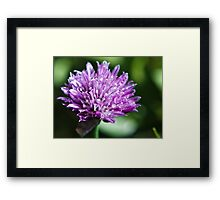 sage bloom Framed Print