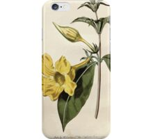 The Botanical magazine, or, Flower garden displayed by William Curtis V9 V10 1795 1796 0111 Allamanda Cathartica Willow Leaved Allamanda iPhone Case/Skin