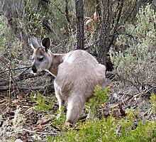Tie me kangaroo down sport.... by Elaine Game