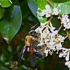 Bee Heaven by Jacqueline Ison