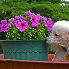 Gee these smell good!!! by Susan Blevins