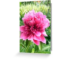 Peony--just for you! Greeting Card