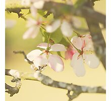 Sakura Sunshine Photographic Print