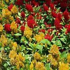 Red & Yellow by wayatsagi