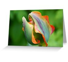 Fire in the petals Greeting Card