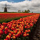 The Colour of Spring by Brendan Schoon