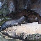 Mommy & Baby Sea Lion by wayatsagi