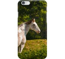 Horse surveying his domain iPhone Case/Skin