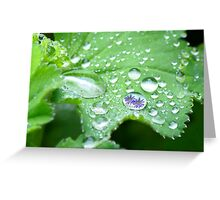 Spring droplets Greeting Card