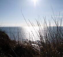 Sewerby Cliffs looking down by Merice  Ewart-Marshall - LFA
