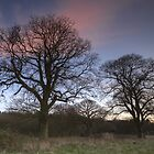 Sunset over Bourne Woods by Nick Atkin