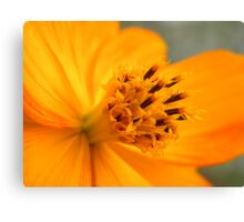 Close macro Canvas Print