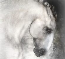 Equus by Shanina Conway