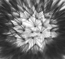blow me by Ralph  Weidne