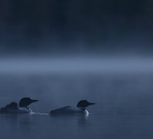 Loons in Blue - Common loons by Jim Cumming