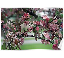 Blossoms Of Spring Poster