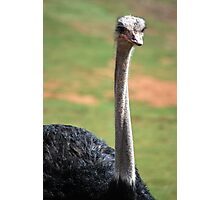 Big Old Emu Photographic Print