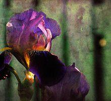 Peaceful Simplicity by © Jolie  Buchanan