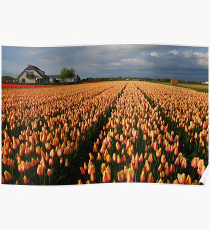 Tulips field Poster