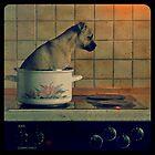 } Hot Dog { by MelAncholyPhoto