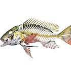 Mutton Snapper by helterskeletons