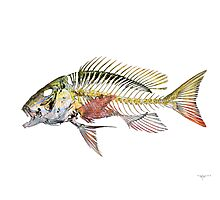 Mutton Snapper Photographic Print
