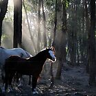 Missy in the Morning Light by Diana-Lee Saville