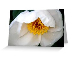 Tender New White Peony Greeting Card