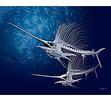 Sailfish Photographic Print